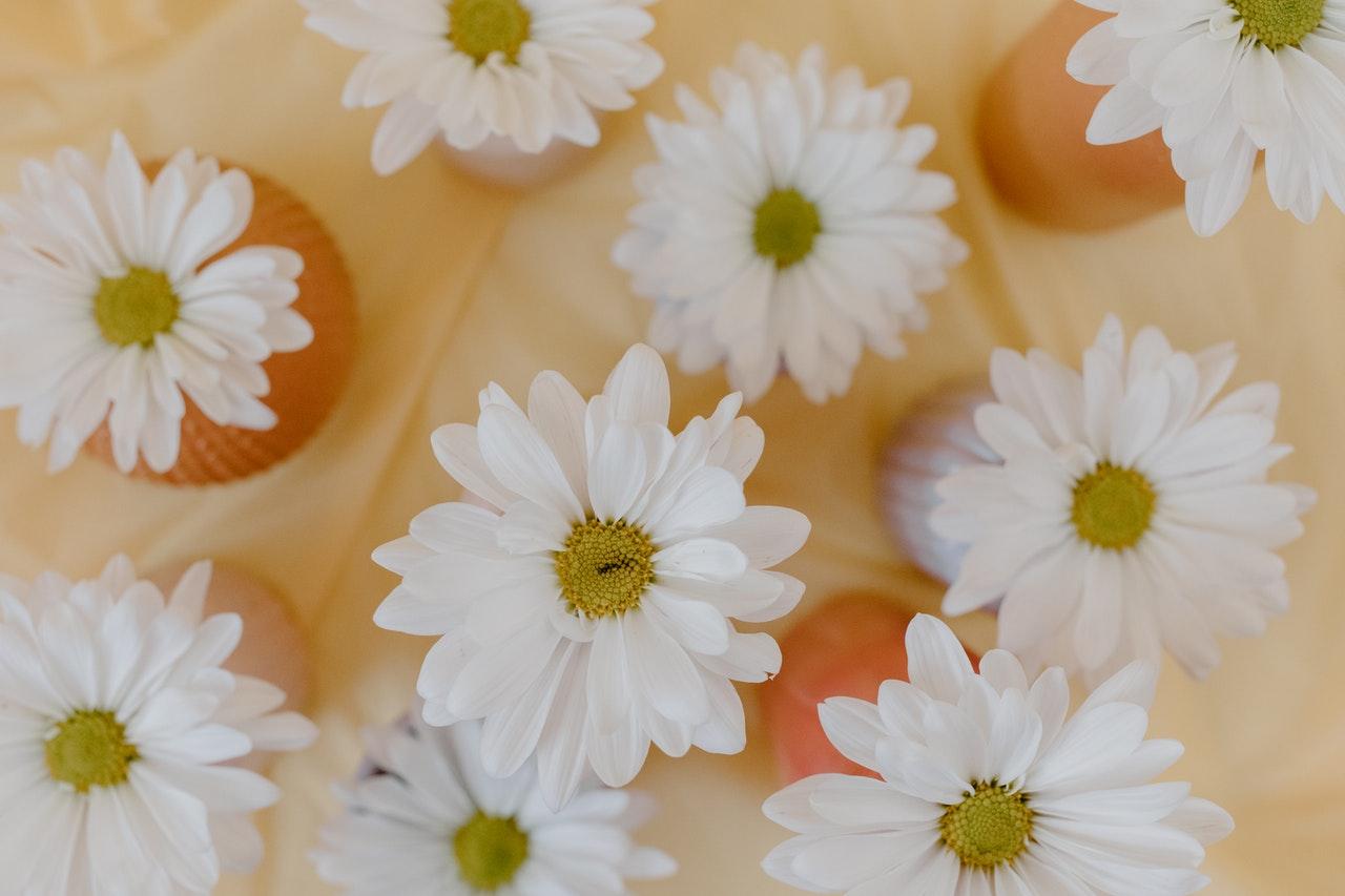 Bild av prästkragar i vaser